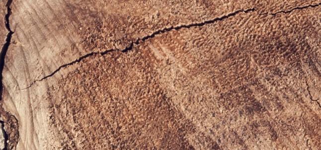 Essenza legno